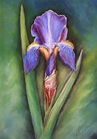 Petra-Wendelken-1-Plants-Flowers-Modern-Age-Modern-Age