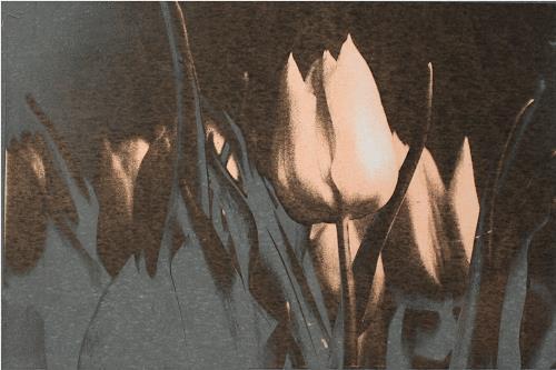 Irene Giesser, Tulpen schwarz silbergrau, Plants: Flowers, Expressionism