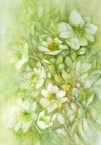 Gertraud Wagner, Christrosen, Plants: Flowers