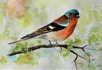 Anett-Struensee-Animals-Air-Modern-Age-Naturalism