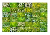 Klaus-Rademaker-Harvest-Nature-Miscellaneous-Contemporary-Art-Contemporary-Art