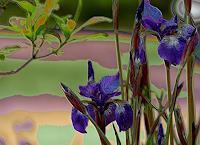 Keike-Pelikan-1-Plants-Modern-Age-Abstract-Art