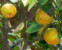 Keike-Pelikan-1-Plants-Modern-Age-Others