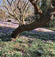 Renate-Horn-Landscapes-Spring-Miscellaneous-Plants-Contemporary-Art-Contemporary-Art