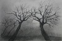 Helga-MATISOVITS-Nature-Plants-Trees
