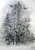 Helga-MATISOVITS-Nature-Wood-Plants-Trees