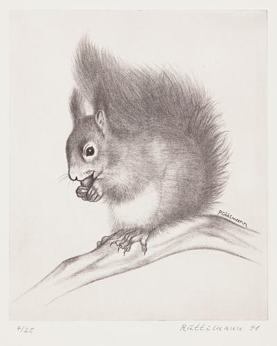Hans Rüttimann, Eichhörnchen - Sciurus vulgaris (L.), Animals: Land, Realism