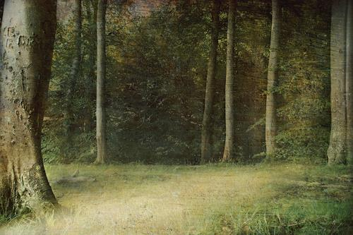 Heike Hultsch, Märchenwald, Miscellaneous Landscapes, Landscapes: Summer, Photo-Realism, Expressionism