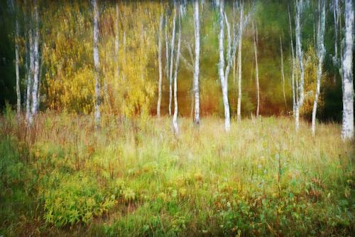 Heike Hultsch, Malerisches Birkenwäldchen, Plants: Trees, Landscapes: Autumn, Neo-Impressionism
