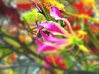 Catrin-Mueller-Plants-Flowers-Modern-Age-Modern-Age