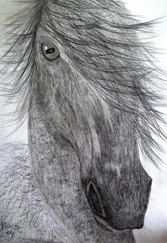 Hanna Rheinz, Wind, Spiel!, Animals: Land, Emotions, Expressive Realism
