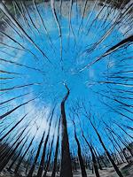Susanne-Geyer-Plants-Trees-Nature-Wood-Contemporary-Art-Contemporary-Art