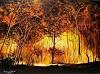 Susanne Geyer, Forest fire