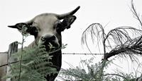 Wally-Leiking-Animals-Land-Animals-Modern-Age-Abstract-Art