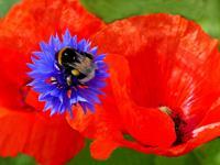 Beate-Ehmann-Plants-Flowers-Animals-Air-Modern-Age-Abstract-Art