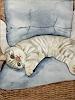 B. C. Davila, Katze, Animals: Land, Decorative Art, Realism