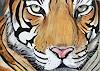 B. C. Davila, Tiger (Tiger)