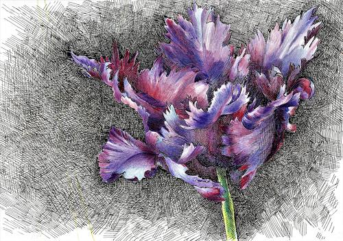 Susanne Thäsler-Wollenberg, Papageientulpe, Plants: Flowers, Fantasy, Expressive Realism, Expressionism