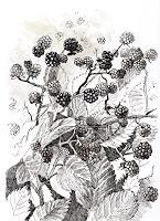 Susanne-Thaesler-Wollenberg-Plants-Fruits-Modern-Age-Expressive-Realism