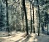 Uli Schweitzer, Winter