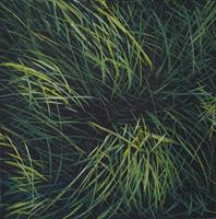 Urs-Brandenburg-Nature-Miscellaneous-Contemporary-Art-Contemporary-Art