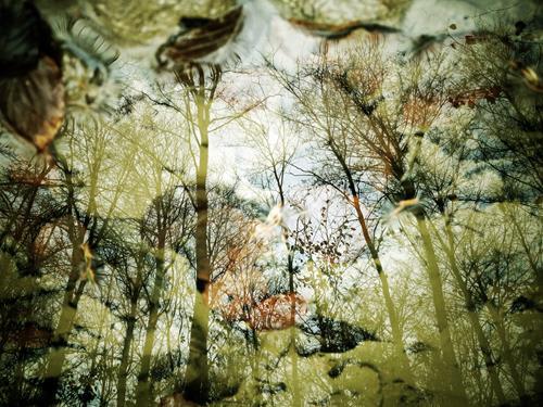 Andrea Kasper, Himmelsblick, Nature, Plants, Minimal Art, Expressionism