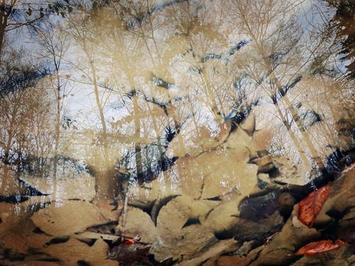 Andrea Kasper, Fantasie der Wirklichkeit, Nature, Plants, Minimal Art, Expressionism