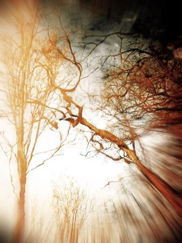 Andrea Kasper, Bizarr, Nature: Wood, Nature: Water, Contemporary Art