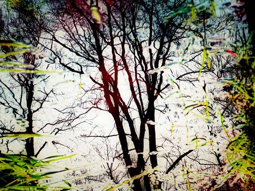 Andrea Kasper, Winteranmut, Fantasy, Plants: Trees, Contemporary Art