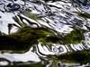 Andrea Kasper, Ufo am schwimmen