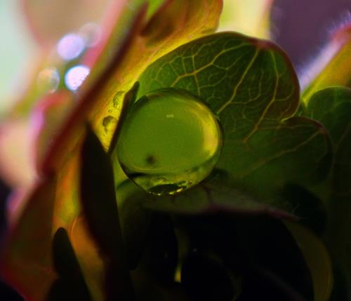 Andrea Kasper, Im Blattgrün verpackt, Plants: Flowers, Nature: Water, Contemporary Art