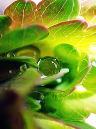 Andrea Kasper, Eine kleine Geschichte vom Regen, Plants: Flowers, Nature: Water, Contemporary Art