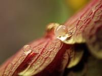 Andrea-Kasper-1-Plants-Flowers-Nature-Water-Contemporary-Art-Contemporary-Art