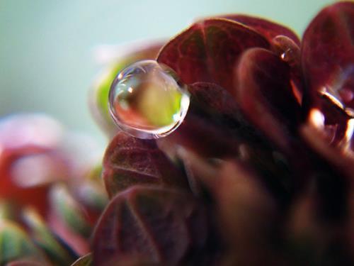 Andrea Kasper, Abstrakte Farbe im Tropfen, Miscellaneous Plants, Nature: Water, Contemporary Art, Expressionism