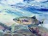 J. Wyss, Pink Salmon