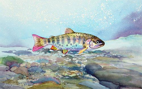 Joseph Wyss, Bachtellachs (Onchorhynchus masou), Animals: Water, Nature: Water, Contemporary Art