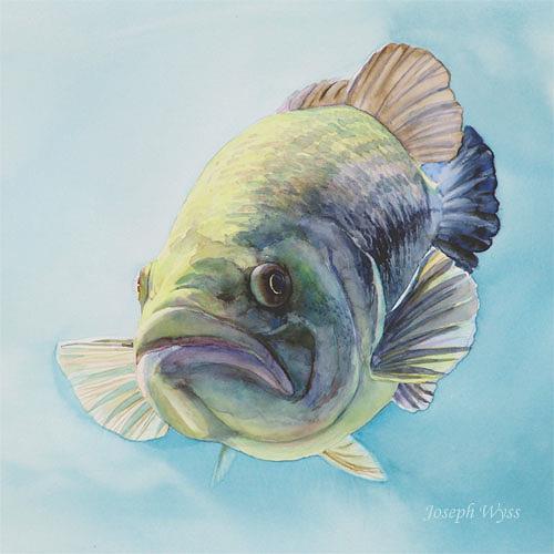 Joseph Wyss, Schwarzbarsch, Animals: Water, Nature: Water, Contemporary Art