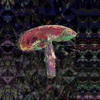 Dieter-Bruhns-Nature-Wood-Fantasy-Contemporary-Art-Contemporary-Art