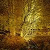 Dieter Bruhns, Swedish Autumn