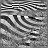 Dieter Bruhns, Zebra Beach