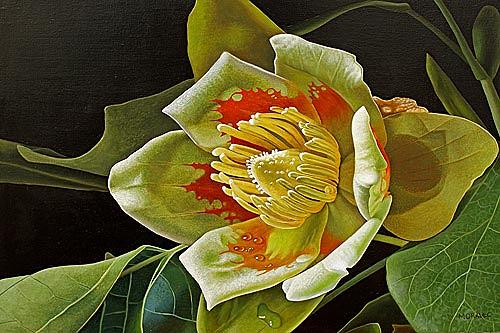 Dietrich Moravec, Liriodendron Tulipifera, Plants: Trees, Plants: Flowers, Photo-Realism, Expressionism