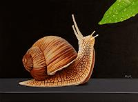 Dietrich-Moravec-Animals-Land-Still-life-Modern-Age-Photo-Realism