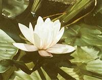 Dietrich-Moravec-Plants-Flowers-Plants-Flowers-Modern-Age-Photo-Realism-Hyperrealism