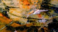 Agnes-Vonhoegen-Miscellaneous-Situations-Modern-Age-Abstract-Art