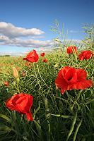 Ulf-Goebel-Plants-Flowers-Landscapes-Spring-Modern-Times-Realism