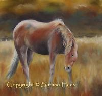 Sabina-Haas-Animals-Land-Nature-Air-Contemporary-Art-Contemporary-Art