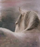 Sabina-Haas-Animals-Land-Miscellaneous-Animals