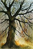 Petra Ackermann, Baum Sudie 2, Plants: Trees, Nature: Wood, Contemporary Art