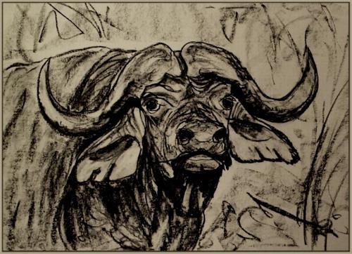 Amigold, Kaffernbüffel, Animals: Land