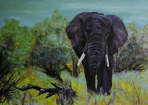 Amigold, Afrika, Landscapes: Plains